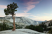 USA, California,Yosemite National Park, lone pine