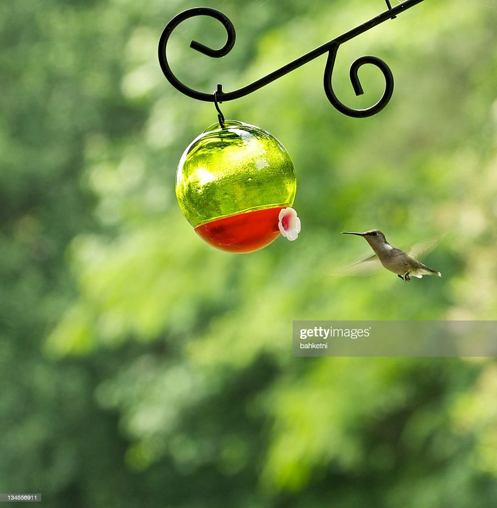 Call of sweet nectar : Stock Photo