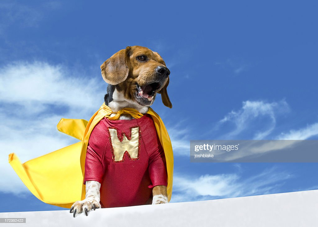Calling WonderDog : Stock Photo