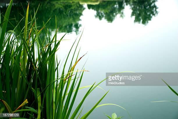 Ruhige Pond