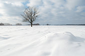 Calm winter landscape, snowy field, the texture of the snow
