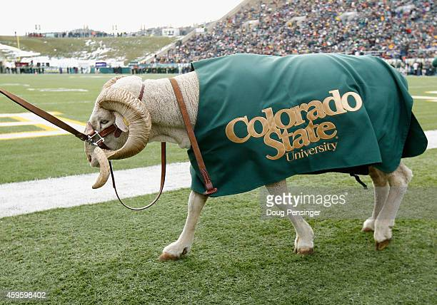 Cam the Ram the mascot of the Colorado State Rams roams the sidelines as they face the New Mexico Lobos on November 22 2014 in Fort Collins Colorado...