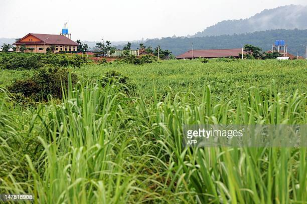 CambodiaagriculturesugareconomytradeFOCUS by Suy Se This photo taken on May 17 2012 shows a general view of sugarcane field in Koh Kong province some...