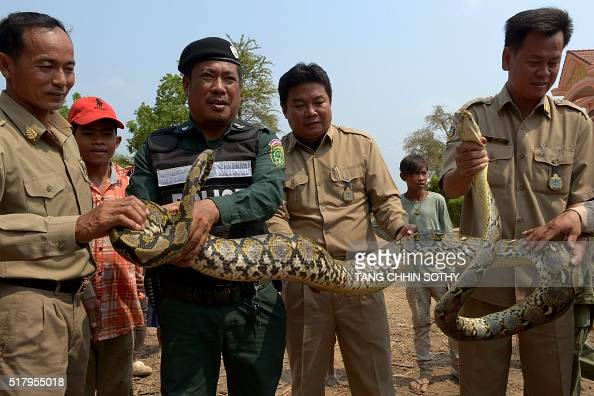 Cambodian authorities hold a python after the snake was confiscated in Kandal province on March 29 2016 Cambodian authorities rescued more than half...