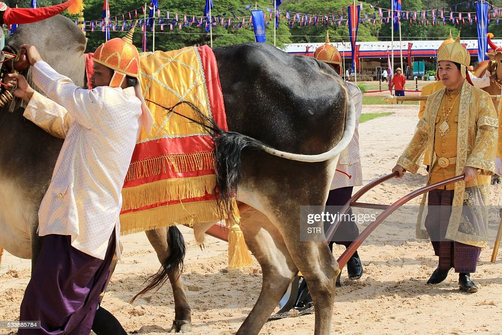 Cambodian Governor of Siem Reap province Khim Bun Song (R) plows during the annual royal plowing ceremony at Angkor complex in Siem Reap province on May 24, 2016. Despite Cambodia hit by the worst drought in half a century, royal oxen on Tuesday predicted during an ancient ritual that the kingdom will see 'bountiful' agricultural harvest this year. / AFP / STR
