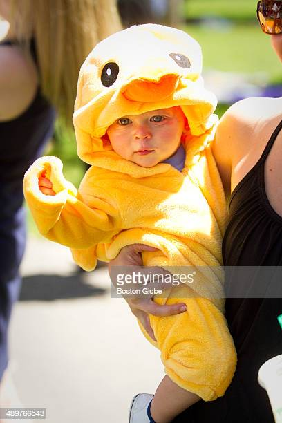 Camden Barber 11 months of Charlestown Mass wore a duckling outfit The Annual Make Way for Ducklings Parade which was led by the Harvard University...