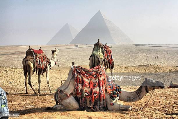Camel and pyramids, Caro, Egypt.
