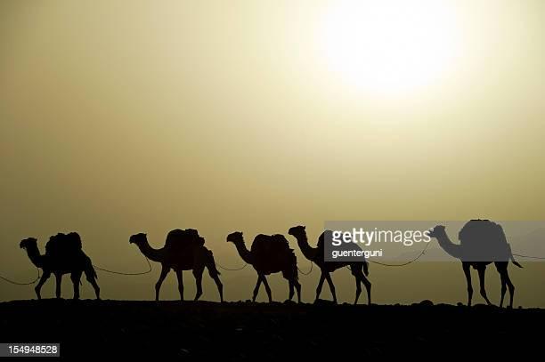 Caravane chameau au coucher du soleil dans le désert, Danakil, Éthiopie