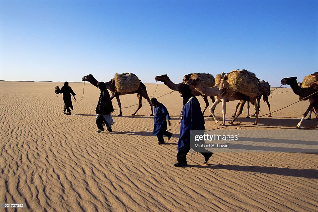 Camel Caravan Crossing The Sahara Desert Stock Photo ...