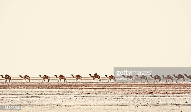 Camel caravan in Danakil Desert, Ethiopia