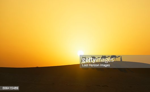 Camel Caravan In Desert At Sunset Dubai United Arab ...