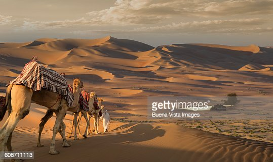 Camel Caravan In Desert At Sunset Stock Photo | Getty Images