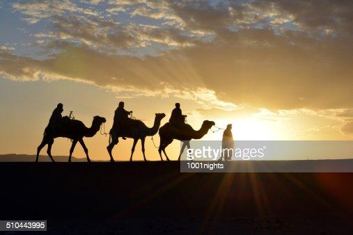 Caravane chameau au Maroc