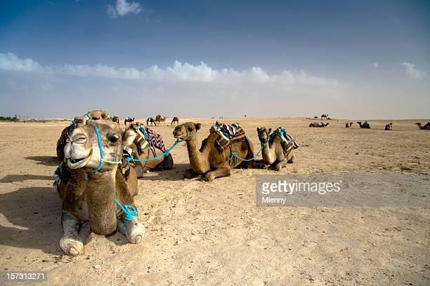 Kamel Karawane Sahara Desert