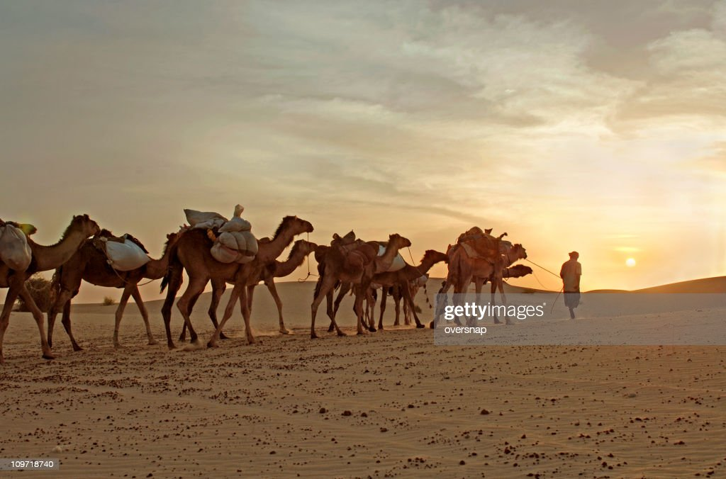 Camel Caravan Travelling Through Desert : Stock Photo