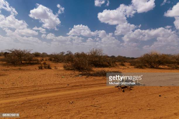 A camel is dead because of the persistent drought in the Somali region in Ethiopia and is lying next to the road on April 03 2017 in Waaf Dhuung...