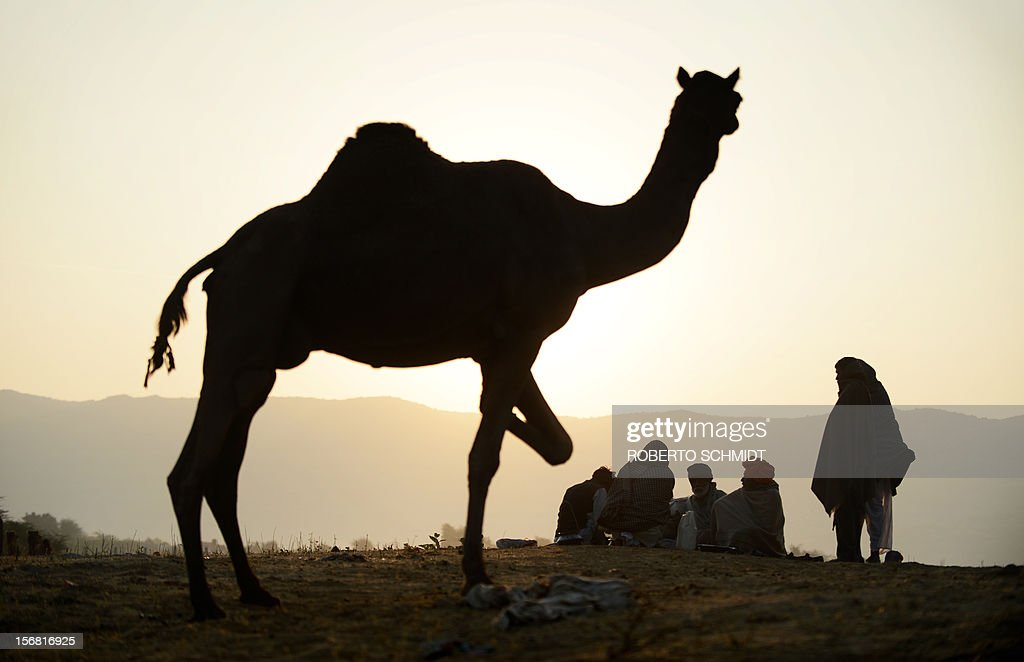 Camel owners sit around at sunrise on the ridge of a hill overlooking the camel fair grounds in the outskirts of the small town of Pushkar on November 22, 2012. Thousands of livestock traders from the region come to the traditional camel fair where livestock but mainly camels are traded. The annual five-day camel and livestock fair is one of the world's largest camel fairs. AFP PHOTO/Roberto Schmidt