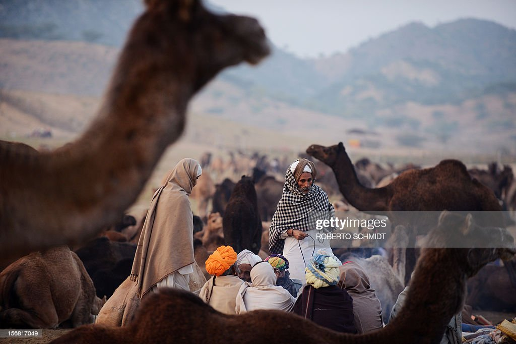 Camel owners sit together near their herds at the camel fair grounds in the outskirts of the small town of Pushkar on November 22, 2012. Thousands of livestock traders from the region come to the traditional camel fair where livestock but mainly camels are traded. The annual five-day camel and livestock fair is one of the world's largest camel fairs. AFP PHOTO/Roberto Schmidt