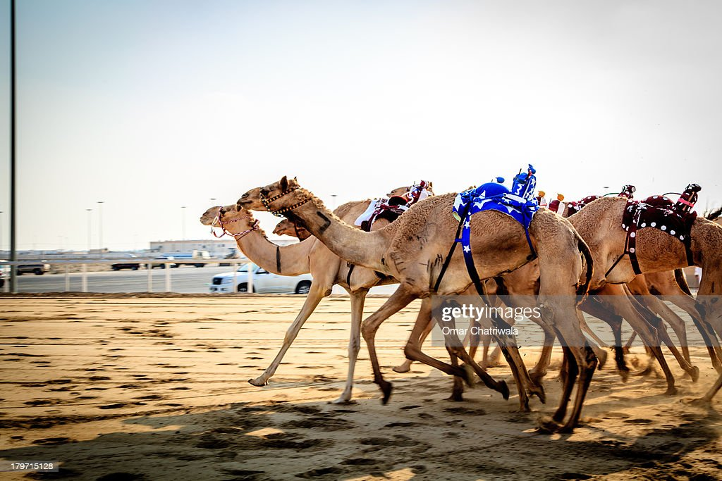 Camel Racing with Robots