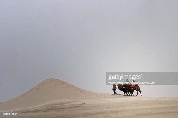 Camel riders on deser
