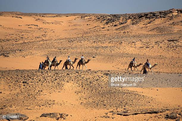 Camel riding in Elenphantine Island