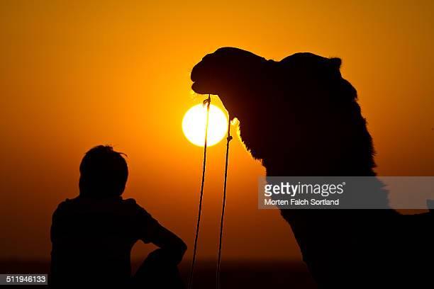 Camel Safari Sunset