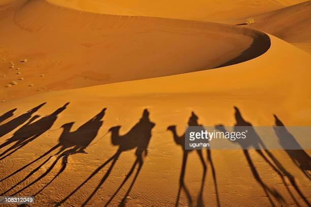 Camel les ombres