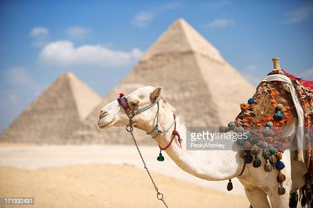 Camel Stands at Great Pyramids of Giza Egypt