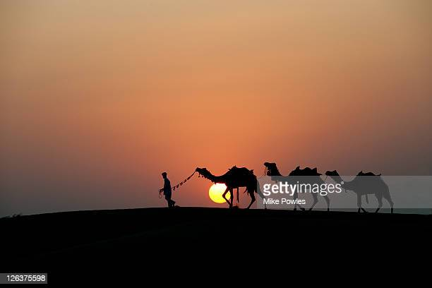 Camel (Camelus dromedarius) train and leader silhouetted at sunset, Rajasthan, India