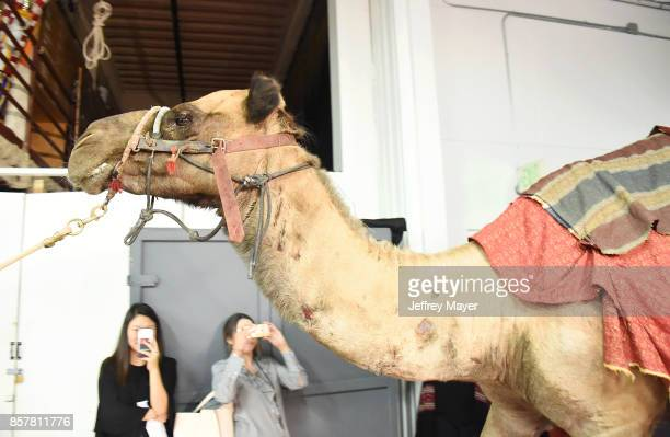 Camel walking through the hallway at the CBS' 'The Carol Burnett Show 50th Anniversary Special' at CBS Televison City on October 4 2017 in Los...