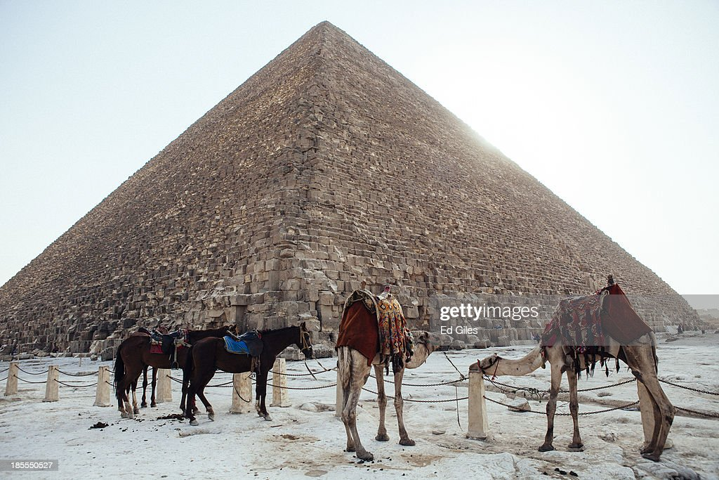 Camels and horses stand tied to a fence below the Great Pyramid of Giza on October 21, 2013 in Cairo, Egypt. The Pyramids of Giza, one of the seven wonders of the ancient world and built around 2600 B.C., are one of Egypt's major tourist drawcards. After a summer of violence, tourist numbers across Egypt are at their lowest levels since a 2010 peak in tourism in the country. While Egypt's tourism sector took a dive following the popular uprising that overthrew President Hosni Mubarak in early 2011, occupancy rates of hotels in the capital Cairo and across Egypt have been reported as dramatically down since the Egyptian military's overthrow of President Morsi in July. In 2010, tourism represented 13% of Egypt's economy and employed one in seven of the country's workers. (Photo by Ed Giles/Getty Images).