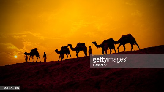 Camels and minders in silhouette