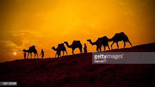 Kamele und minders in silhouette, Indien