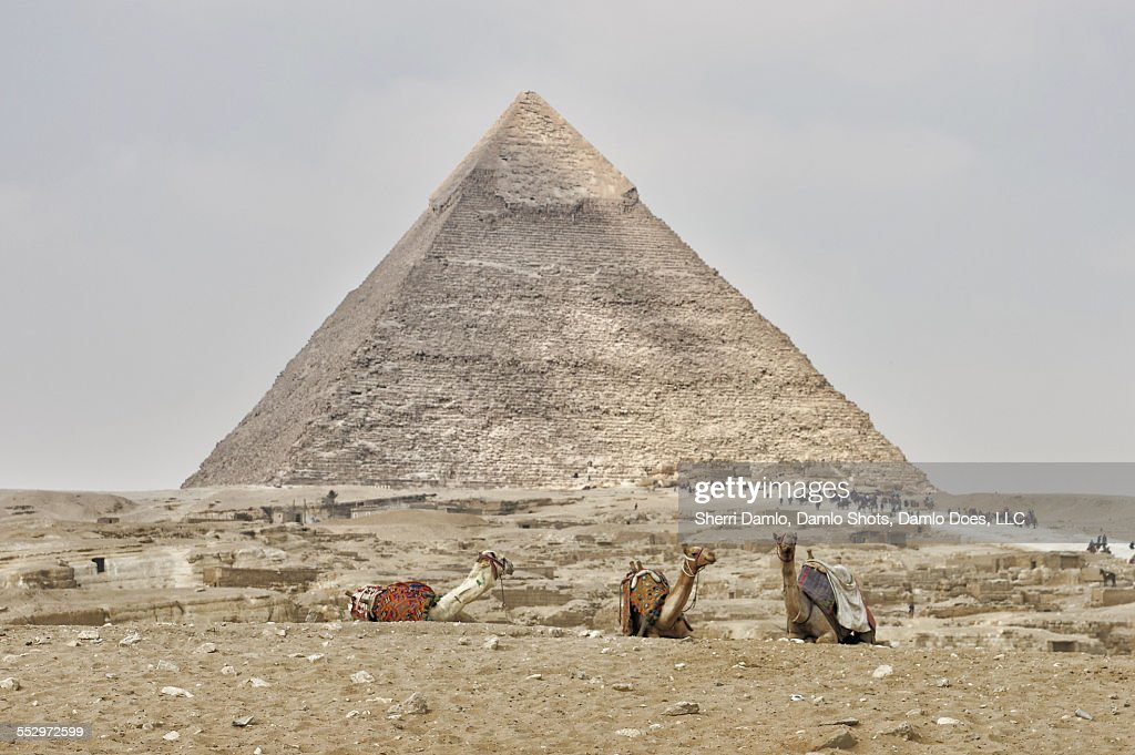 Camels at the base of the pyramids : Stock Photo