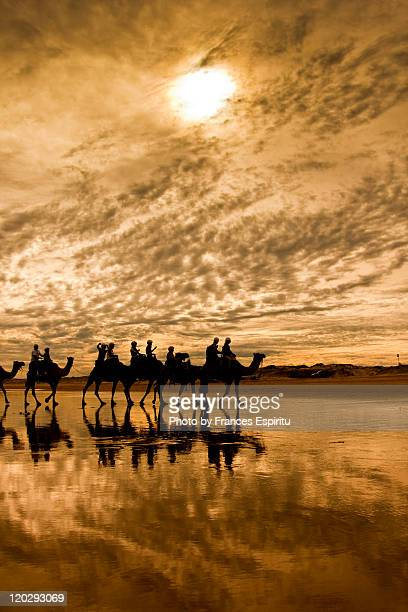 Camels by  beach