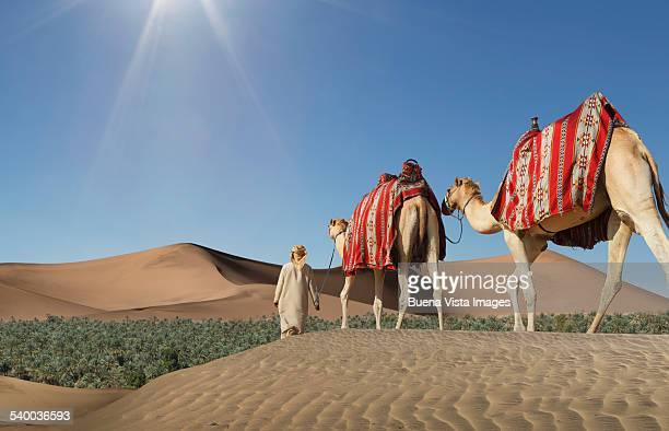 Camels caravan arriving in a green oasis