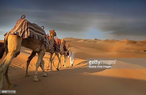 Fila De Camellos Fotografías e imágenes de stock | Getty ...