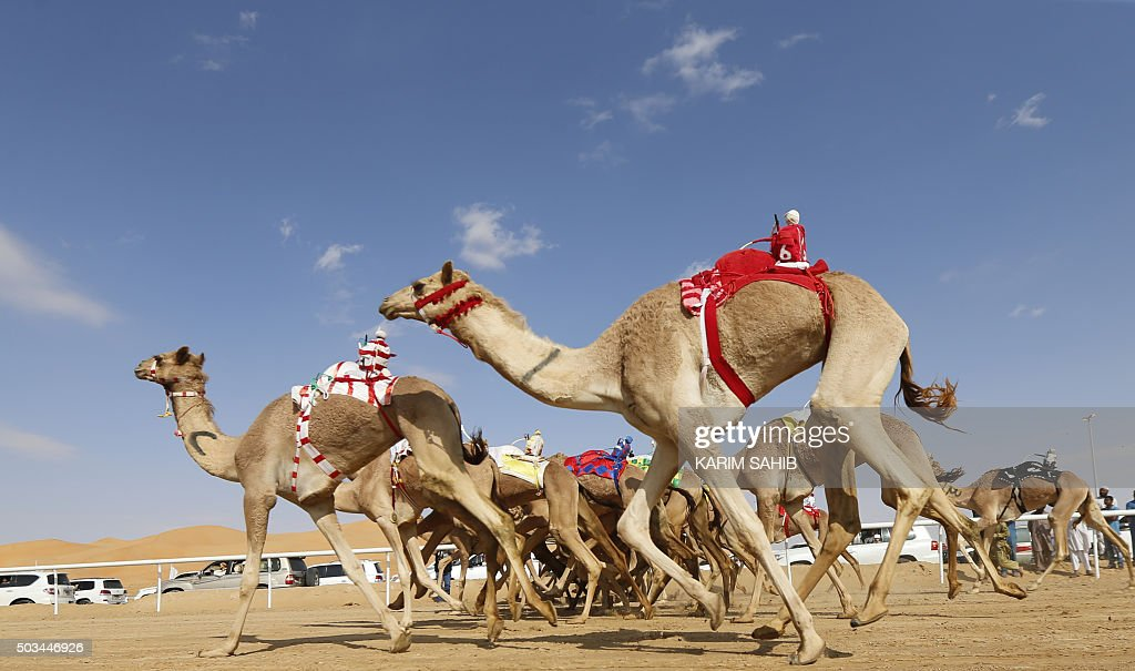 Camels compete during the Liwa 2016 Moreeb Dune Festival on January 5, 2016, in the Liwa desert, 250 kilometres west of the Gulf emirate of Abu Dhabi. The festival, which attracts participants from around the Gulf region, includes a variety of races (cars, bikes, falcons, camels and horses) or other activities aimed at promoting the country's folklore. AFP PHOTO / KARIM