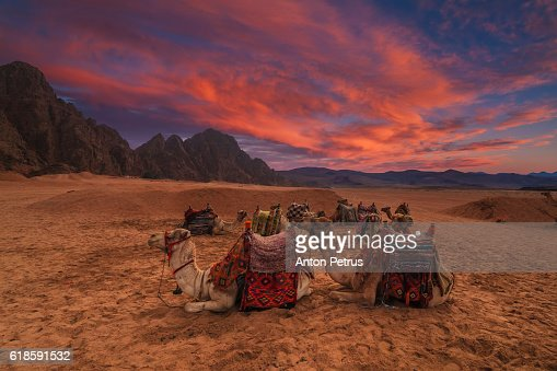 Sinai Desert Stock Photos and Pictures | Getty Images