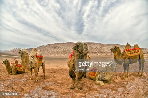 Camels of The Flaming Mountains