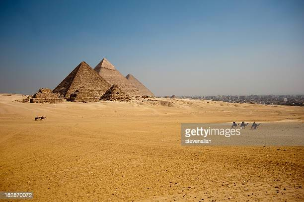 Camels on the Giza plateau the great pyramids
