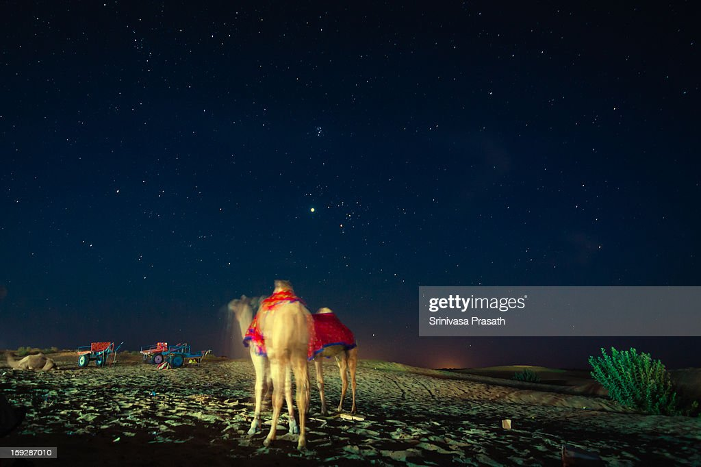 CONTENT] Camels resting under the starlit sky after a tiring day at the sand dunes. Jaisalmer, India.