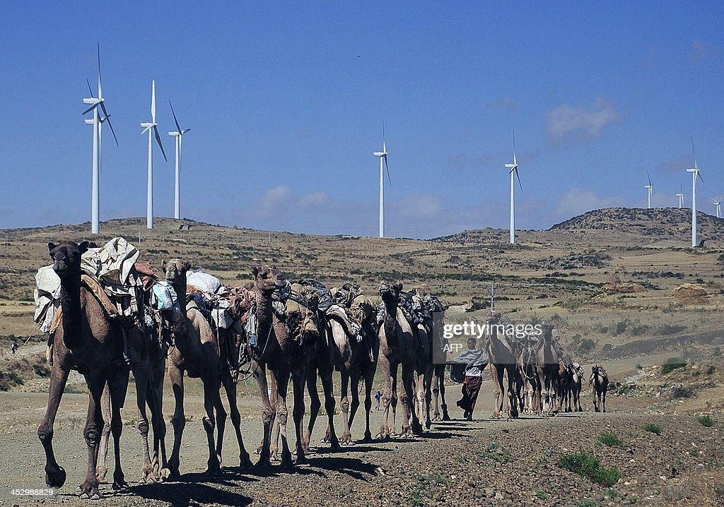 Camels walk along the road near turbines at Ashegoda wind farm in Ethiopia's northern Tigray region on November 28 2013 The farm built by France's...