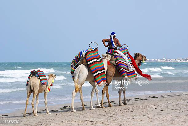 Camels walking on the beach with packs on back