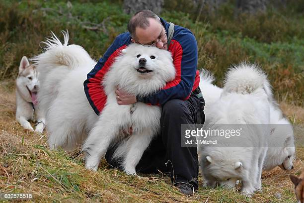Cameron Elder hugs his Samoyed during practice at a forest course ahead of the Aviemore Sled Dog Rally on January 24 2016 in Feshiebridge Scotland...