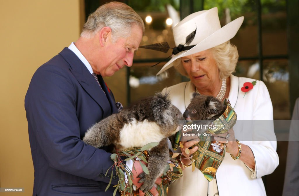 <a gi-track='captionPersonalityLinkClicked' href=/galleries/search?phrase=Camilla+-+Duchess+of+Cornwall&family=editorial&specificpeople=158157 ng-click='$event.stopPropagation()'>Camilla</a>, Duchess of Cornwall and <a gi-track='captionPersonalityLinkClicked' href=/galleries/search?phrase=Prince+Charles+-+Prince+of+Wales&family=editorial&specificpeople=160180 ng-click='$event.stopPropagation()'>Prince Charles</a>, Prince of Wales hold koalas at Government House on November 7, 2012 in Adelaide, Australia. The Royal couple are in Australia on the second leg of a Diamond Jubilee Tour taking in Papua New Guinea, Australia and New Zealand.