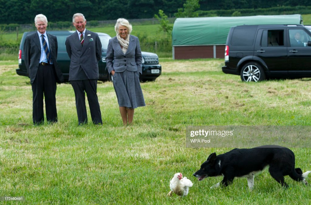 <a gi-track='captionPersonalityLinkClicked' href=/galleries/search?phrase=Camilla+-+Duchess+of+Cornwall&family=editorial&specificpeople=158157 ng-click='$event.stopPropagation()'>Camilla</a>, Duchess of Cornwall and <a gi-track='captionPersonalityLinkClicked' href=/galleries/search?phrase=Prince+Charles+-+Prince+of+Wales&family=editorial&specificpeople=160180 ng-click='$event.stopPropagation()'>Prince Charles</a>, Prince of Wales watch a Border Collie dog named Dot as it rounds up chickens during a tour of Rhug Estate Farm on July 2, 2013 in Corwen, Denbighshire, Wales, United Kingdom.