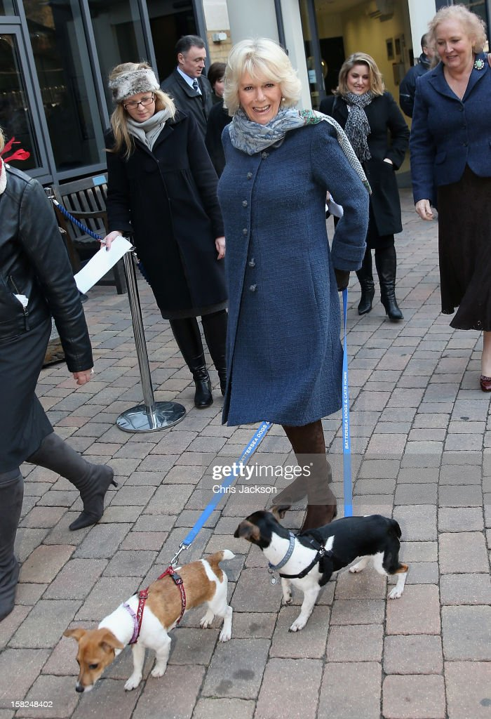 Camilla, Duchess of Cornwall arrives at Battersea Dog and Cats Home with her two Jack Russell terriers Beth and Bluebell on December 12, 2012 in London, England. The Duchess of Cornwall as patron of Battersea Dog and Cats home visited with her two Jack Russell terriers Beth, a 3 month old who came to Battersea as an unwanted puppy in August 2011 and Bluebell a nine week old stray who was found wandering in a London Park in September 2012.