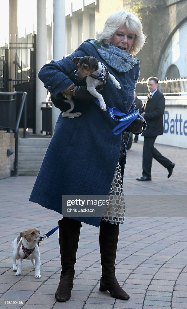 Camilla, Duchess of Cornwall arrives at Battersea Dog and Cats Home with her two Jack Russell terriers Beth and Bluebell on December 12, 2012 in London, England. Duchess of Cornwall as patron of Battersea Dog and Cats home visited with her two Jack Russell terriers Beth, a 3 month old who came to Battersea as an unwanted puppy in August 2011 and Bluebell a nine week old stray who was found wandering in a London Park in September 2012.