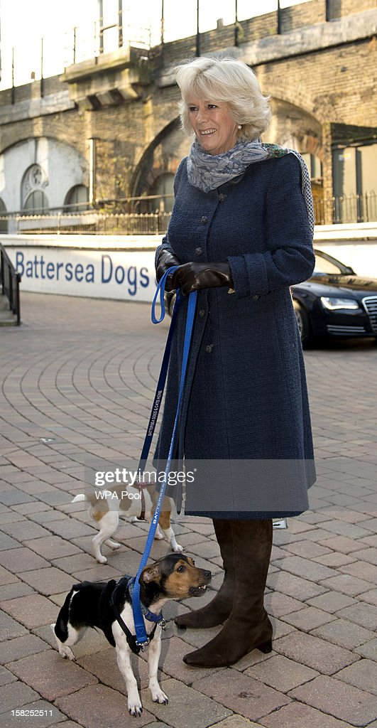 Camilla, Duchess of Cornwall arrives with her two Jack Russell dogs Bluebell and Beth during a visit to Battersea Dog and Cats Home on December 12, 2012 in London, England. The Duchess of Cornwall as patron of Battersea Dog and Cats home visited with her two Jack Russell terriers Beth, a 3 month old who came to Battersea as an unwanted puppy in August 2011 and Bluebell a nine week old stray who was found wandering in a London Park in September 2012.